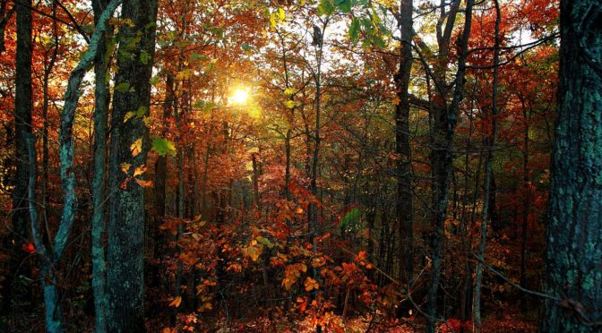 1280px-autumn-trees-leaves-foliage-sunset_-_west_virginia_-_forestwander